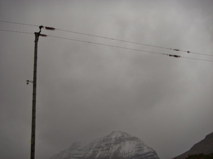Even in the glen, winds reached 100mph with grass tangled in the power lines!