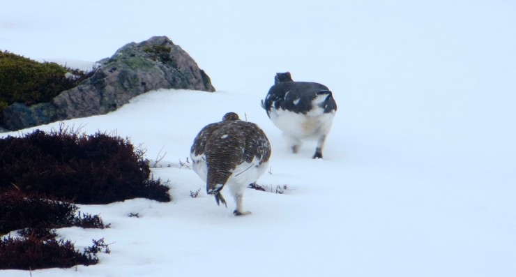 Good company on the hill today between 500 and 700 metres. (Apologies to the MA).